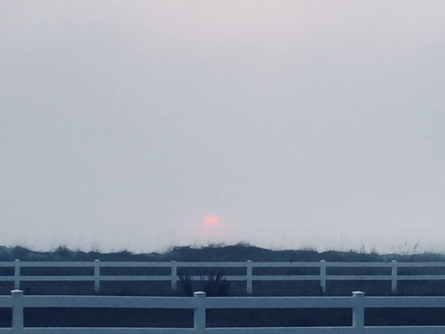 sunriserose